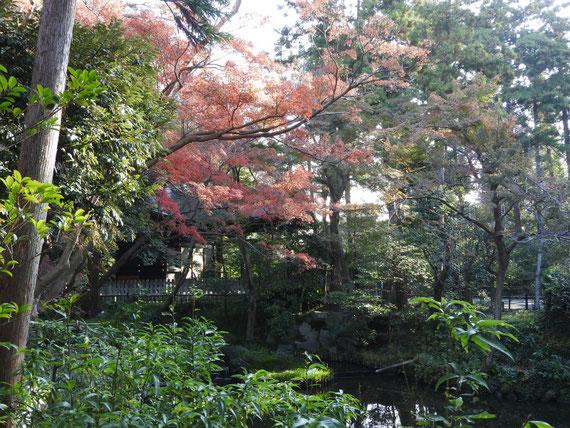 紅葉の白旗神社