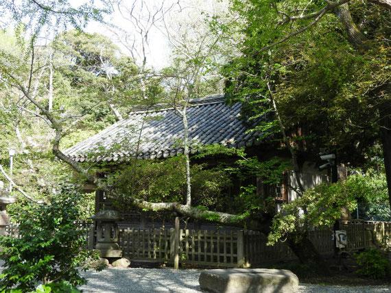 与謝野晶子の歌碑から観月堂