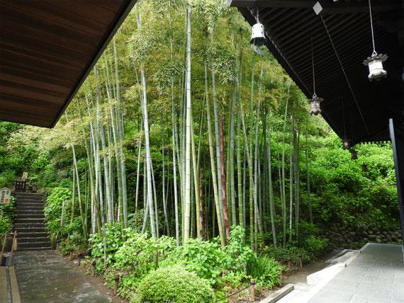 経堂の竹林