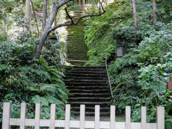 仁王門から苔石段