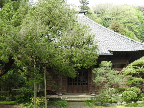 寿福寺本堂。 御廟のため中には入れません。
