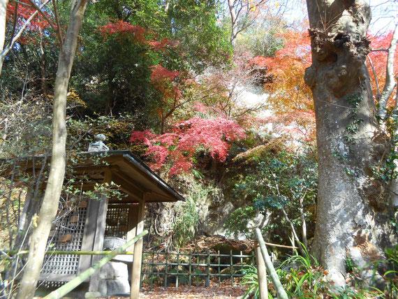 開山堂下の小道付近の紅葉