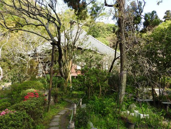庭園から本堂を望む。 花の寺の庭園が素晴らしい。