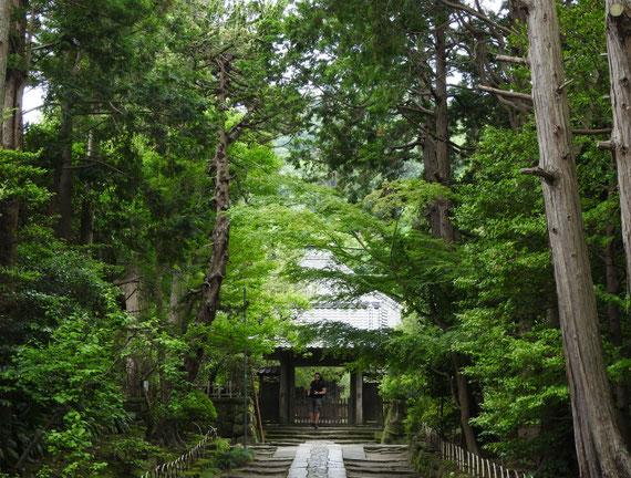 壽福金剛禅寺中門と本堂 5月