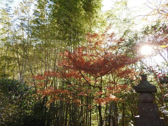 境内の紅葉と竹林