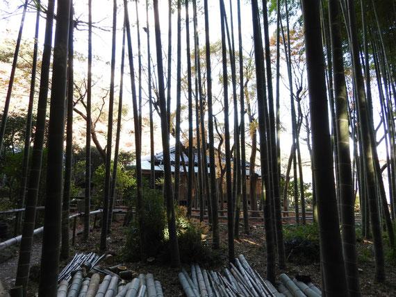 竹林の中から書院を望む
