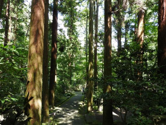 墓苑への参道
