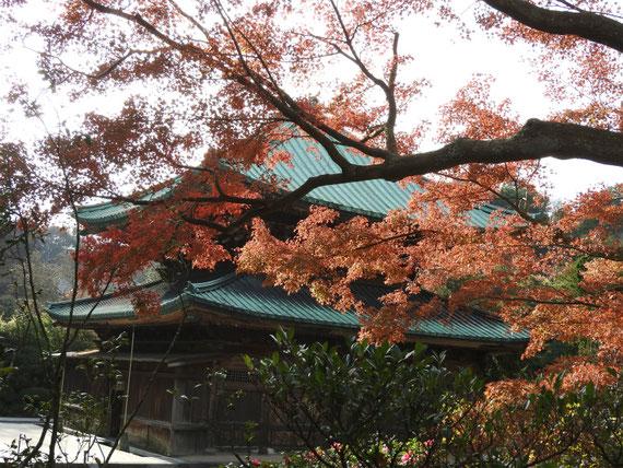 紅葉の建長寺仏殿