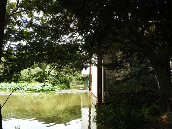 鶴岡八幡宮参道からみる近代美術館と平家池