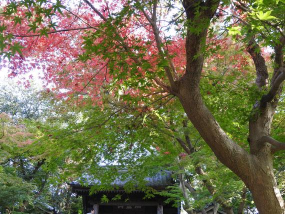 円覚寺総門の紅葉