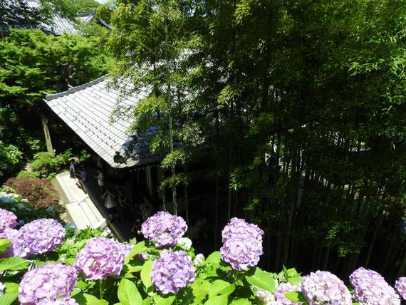 経堂と紫陽花 160610撮影