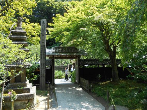 本堂側からの山門、周りは深い樹木におおわれていました