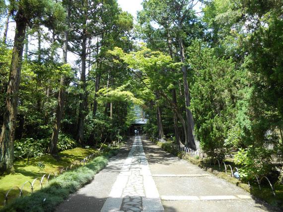 壽福寺、中門への参道 6月、この参道がすごく良い。
