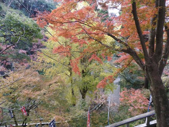 急階段の途中からみる、紅葉