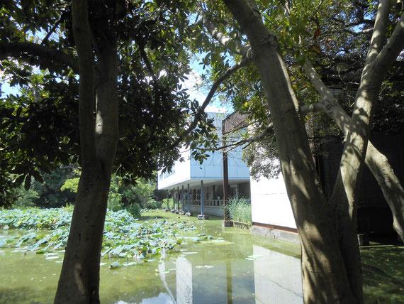 八幡宮参道横の平家池から、美術館を望む