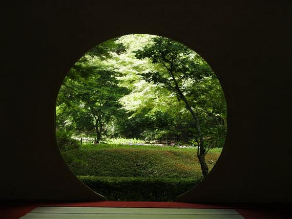 明月院本堂の方丈の丸窓、後庭園の花菖蒲園を観る