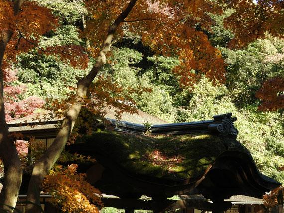 旧天瑞寺寿塔覇堂から観た臨春閣