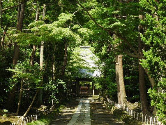 8月の、壽福金剛禅寺参道
