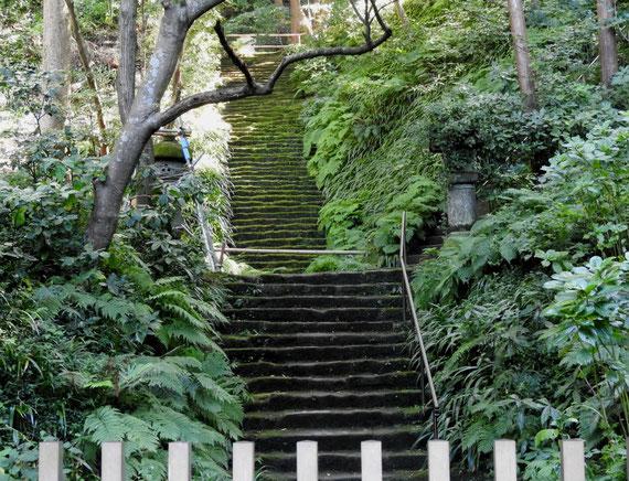 妙法寺苔石段 10月