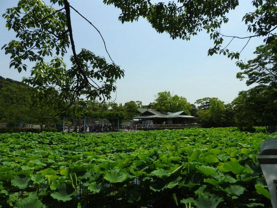 源氏池の風景