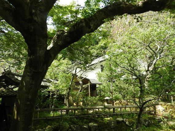 本堂の庭から、松ヶ岡宝蔵をみる