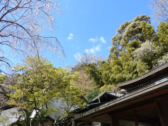 本堂庭からみる、松ヶ岡宝蔵と水月堂の屋根