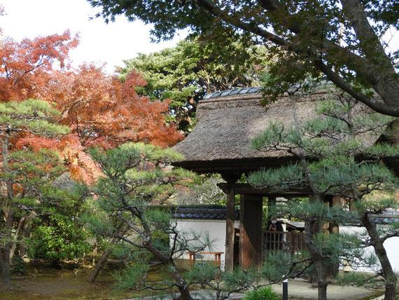 紅葉の、長寿禅寺書山門
