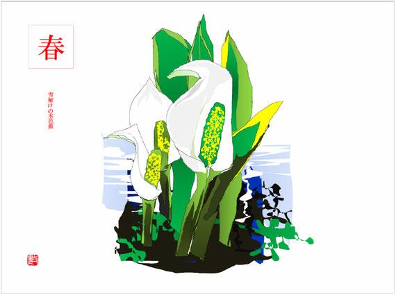 短歌「少年の記憶」の挿し絵 水芭蕉(みずばしょう) 2018/02/01制作