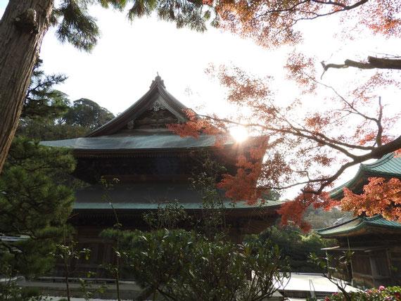 紅葉の建長寺法堂