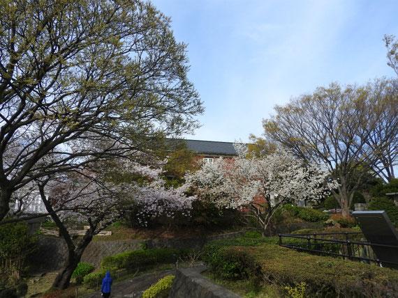 霧笛橋より、大佛次郎記念館を望む