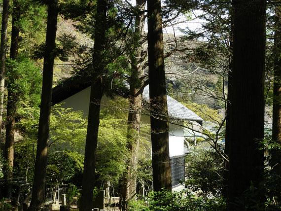 東慶寺墓所から松ヶ岡宝蔵をみる 4月