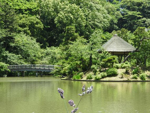 水カンナと池、観心橋、涵花亭