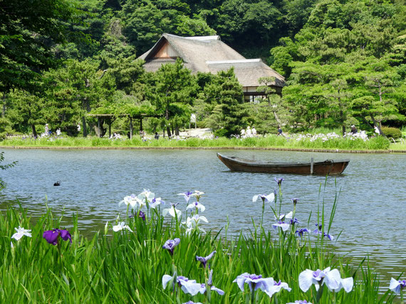 花菖蒲と大池から鶴翔閣を望む