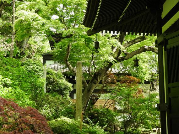 長谷寺経堂横庭園 4月
