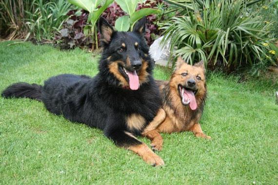 Zora und Alf