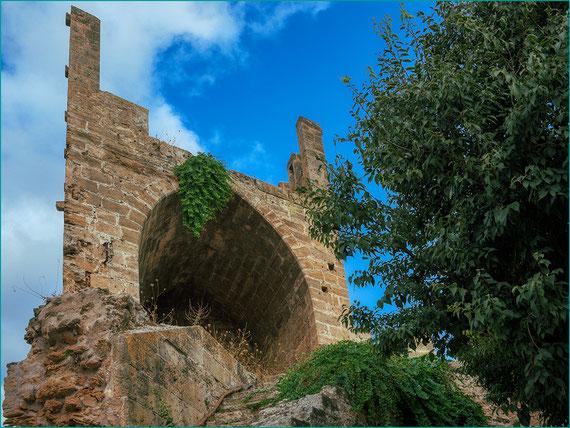 Alcaparras na parede de Alcudia