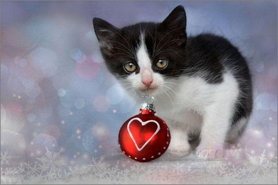 クリスマスシーズンの猫