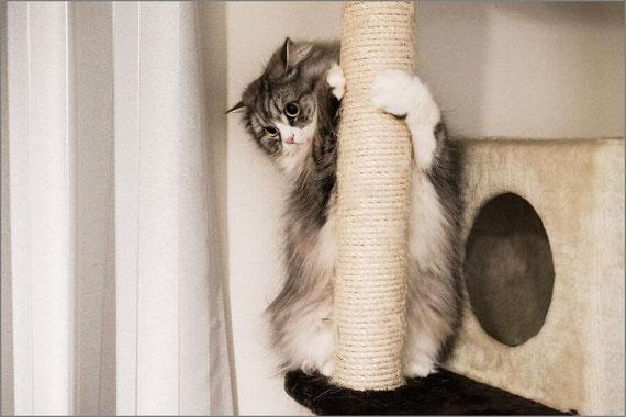 恥ずかしがる猫