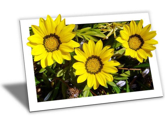 Sonnenblumen im Bilderrahmen
