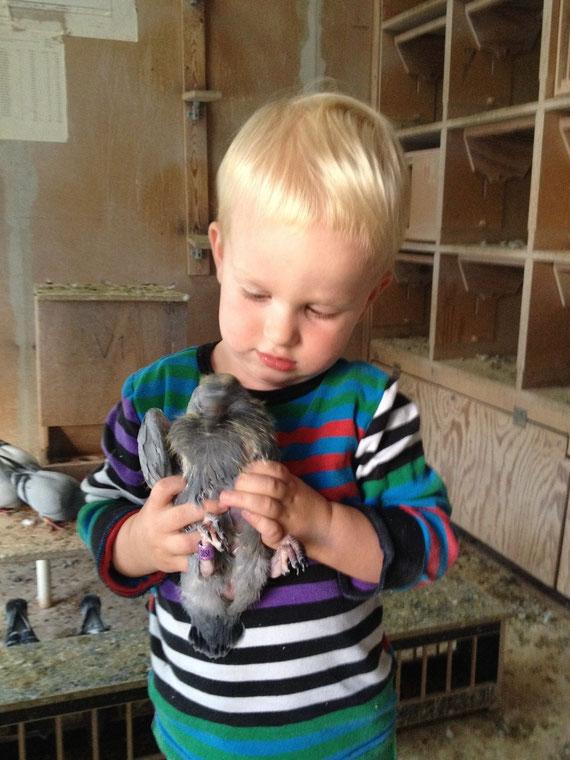 Unser Enkelkind Ruben ( 2 Jahre ) bei der Begutachtung einer Jungtaube