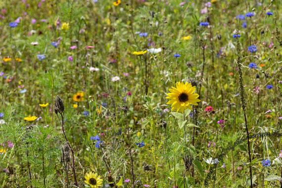 Steveraue, Naturschutzgebiet, Naturschutz