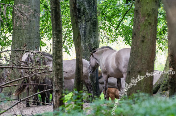 Steveraue, Naturschutzgebiet, Naturschutz, Pferd, Pferde