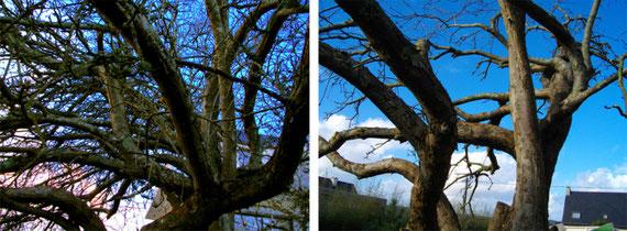 wezenn elagage devis gratuit brest plougastel taille arbre haie grimpeur élagueur david laurent entretien espace vert BMO taille de pommier taille de formation