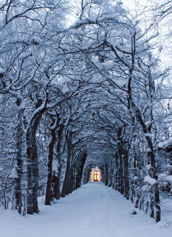 Tunnelgeäst im Proschwitzer Schlossgarten