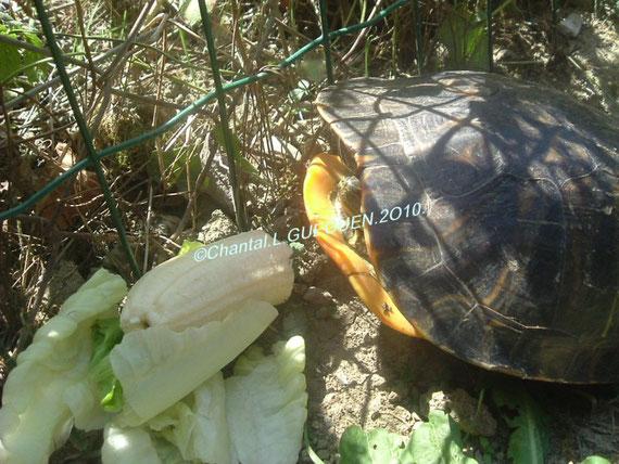 Là voilà de face avec de la banane et des feuilles fraîches de salade...