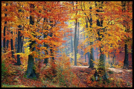 """""""bild"""" Herbstwald, Mabon, Alban Elued, Herbst Tag- und Nachtgleiche, Räucherung, Feiern"""