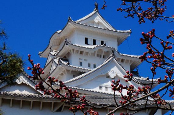 今度は桜(ピンク)の姫路城を見に来たいです。