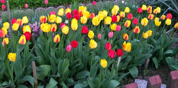 Frühling in der Kleingartenanlage