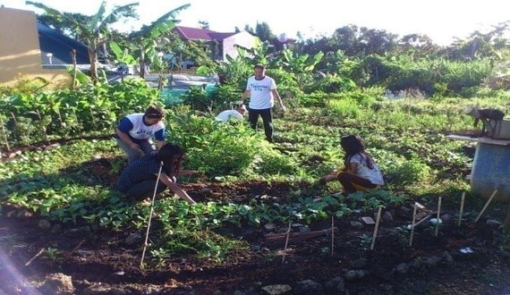SCHOOL, HOME  AND COMMUNITY FOOD PRODUCTION