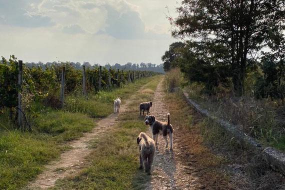Spaziergang in Weinfeldern